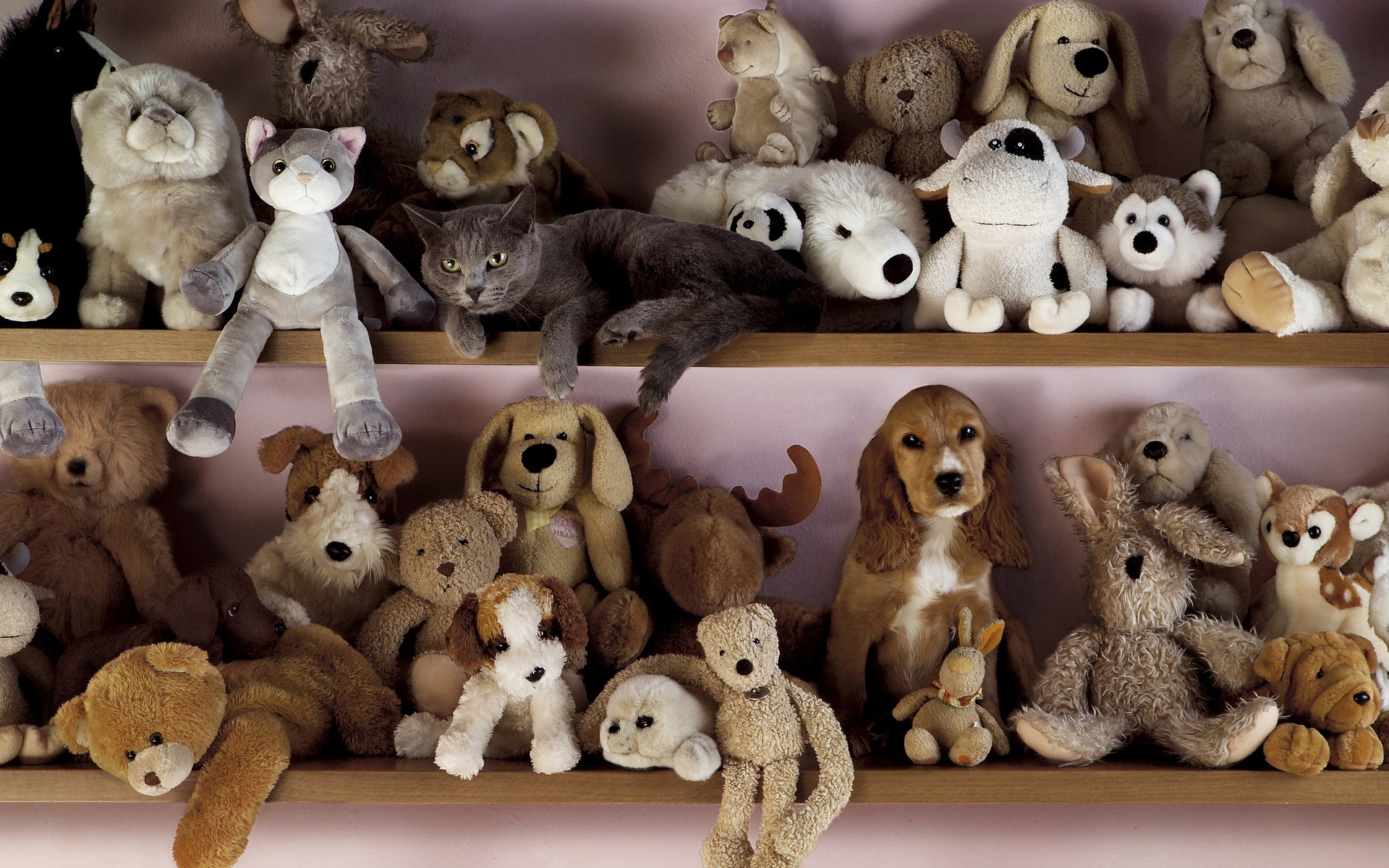 http://www.zarrintrade.com/wp-content/uploads/2014/04/toys_dog_cat_shelf_71891_1920x1200.jpg